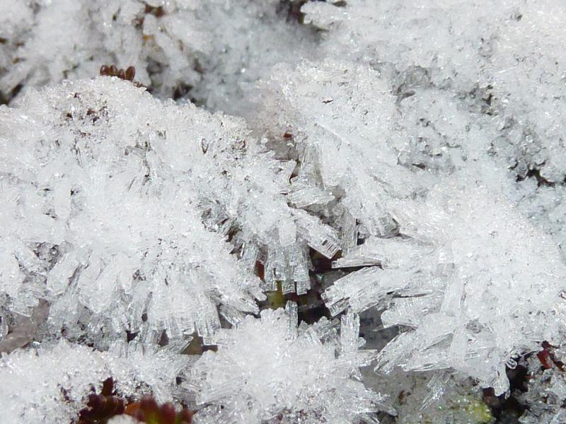 2011-11-18-1413_-_snekrystal_vegetation_5