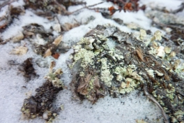 2011-11-17-1506_-_snekrystal_vegetation_2