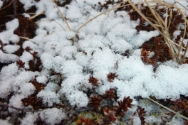 2011-11-18-1413_-_snekrystal_vegetation