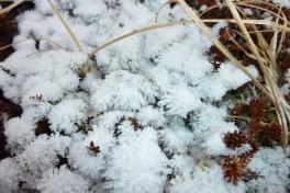 2011-11-18-1413_-_snekrystal_vegetation_3