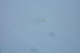 2012-01-27-1414_-_spor