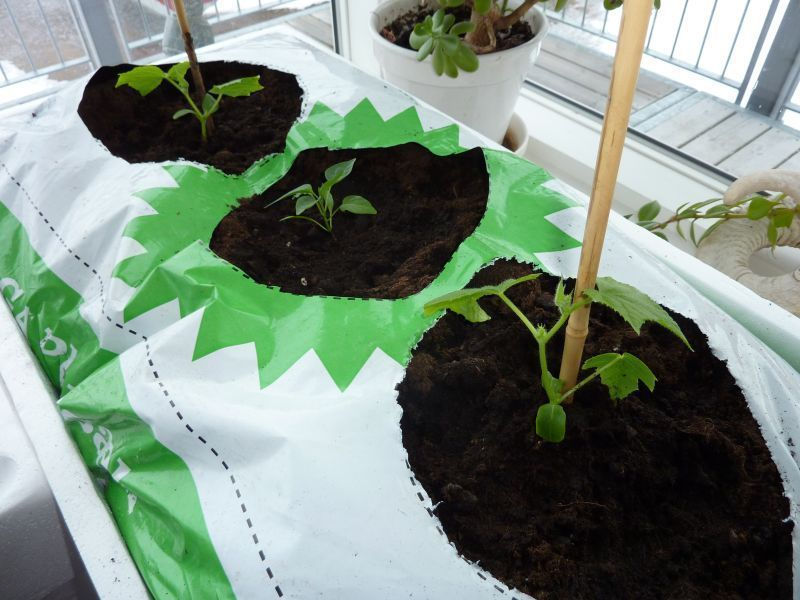 2012-04-03-0854_-_agurkeplante_chiliplante_tomatplante