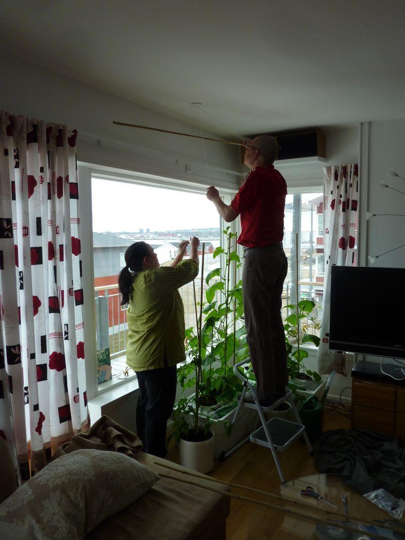 2012-05-05-1212_-_agurkeplante_chiliplante_maren_mikkelsen_lennert_palle_sandgreen_tomatplante