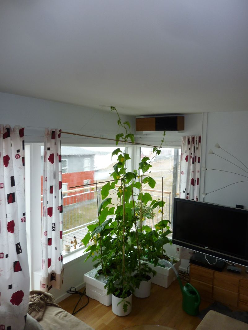 2012-05-15-1321_-_agurkeplante_chiliplante_tomatplante_2