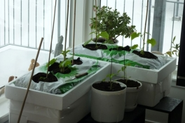 2012-04-13-0930_-_agurkeplante_chiliplante_tomatplante