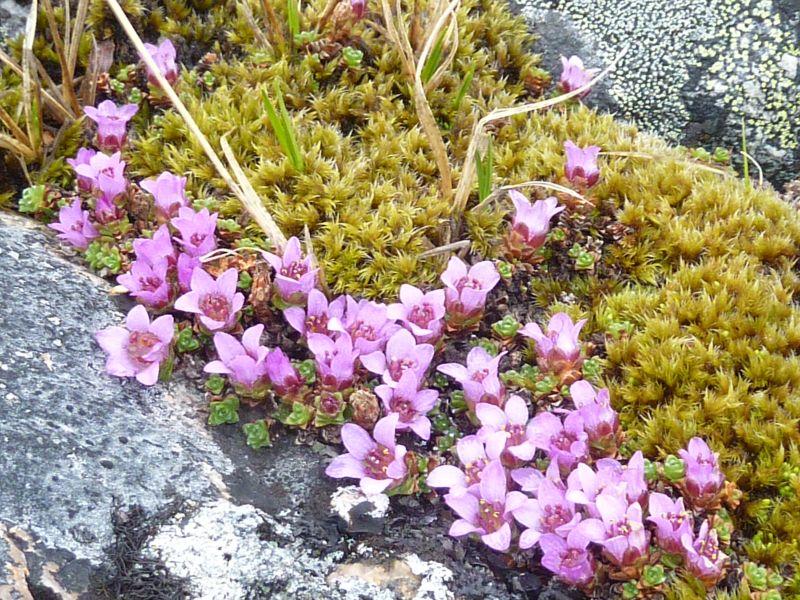 2012-05-18-1413_-_vegetation