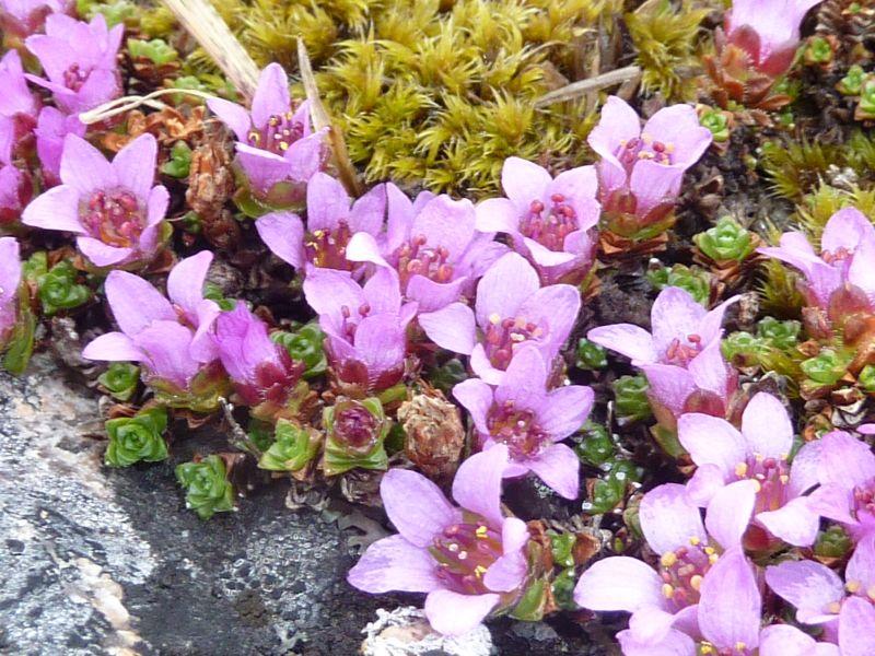 2012-05-18-1413_-_vegetation_2