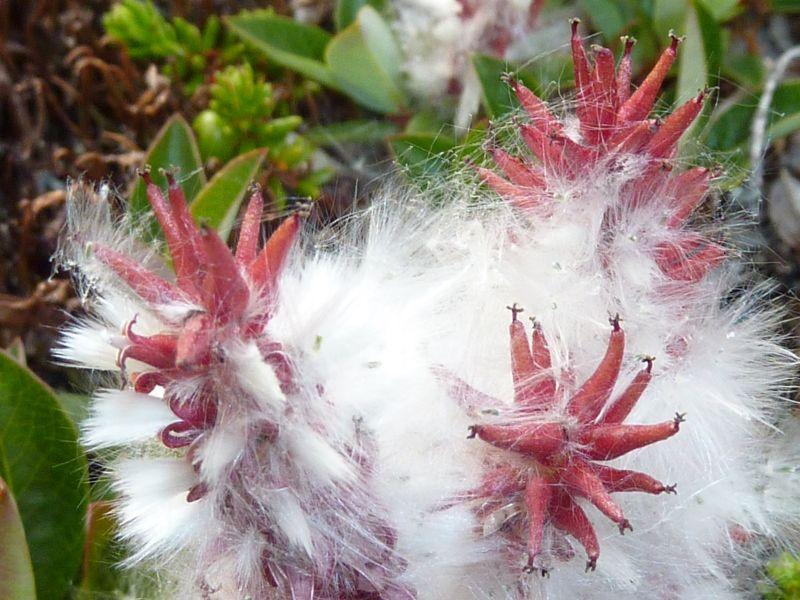 2012-07-02-1829_-_vegetation