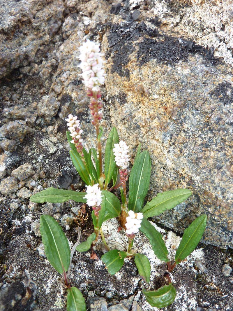 2012-07-02-1839_-_vegetation