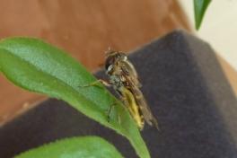 2012-08-15-1821_-_insekt