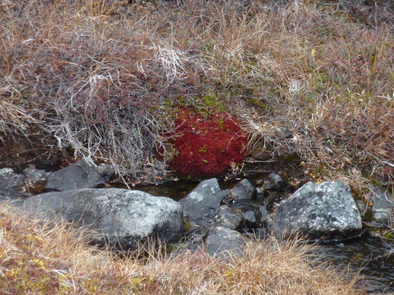 2012-09-30-1304_-_vegetation