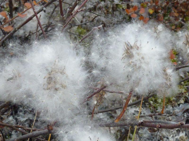 2012-09-30-1313_-_vegetation_2