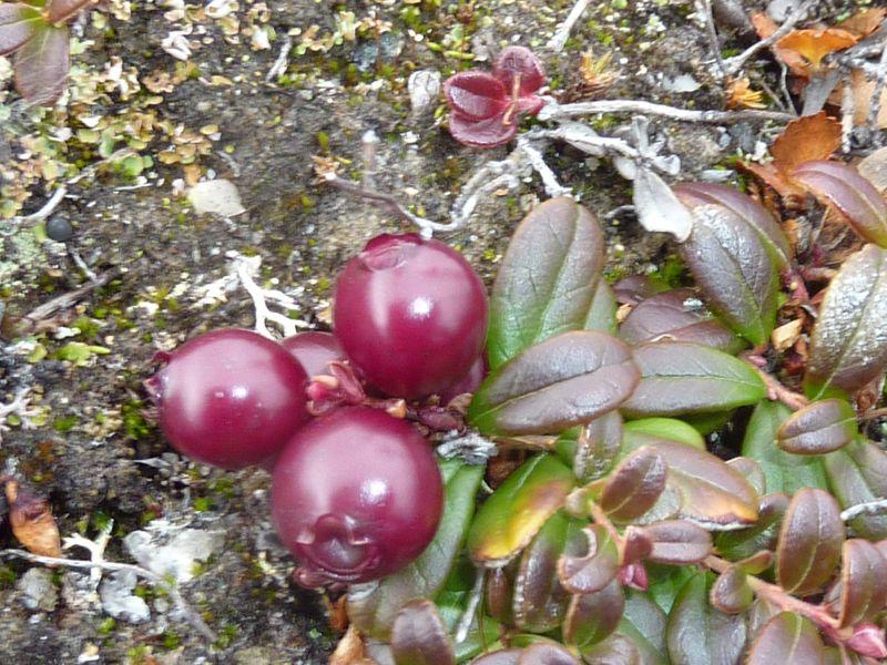 2012-09-30-1357_-_vegetation