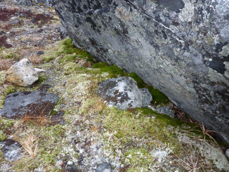 2012-11-06-1414_-_vegetation
