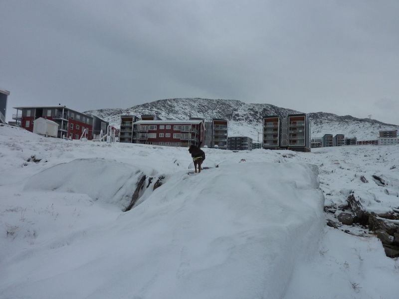 2012-11-14-1332_-_djanco_pupik