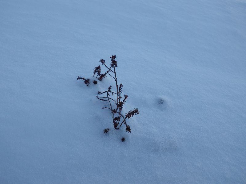2012-12-05-1731_-_vegetation