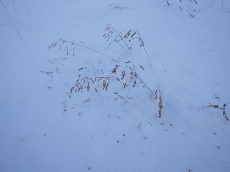 2012-12-13-1713_-_vegetation