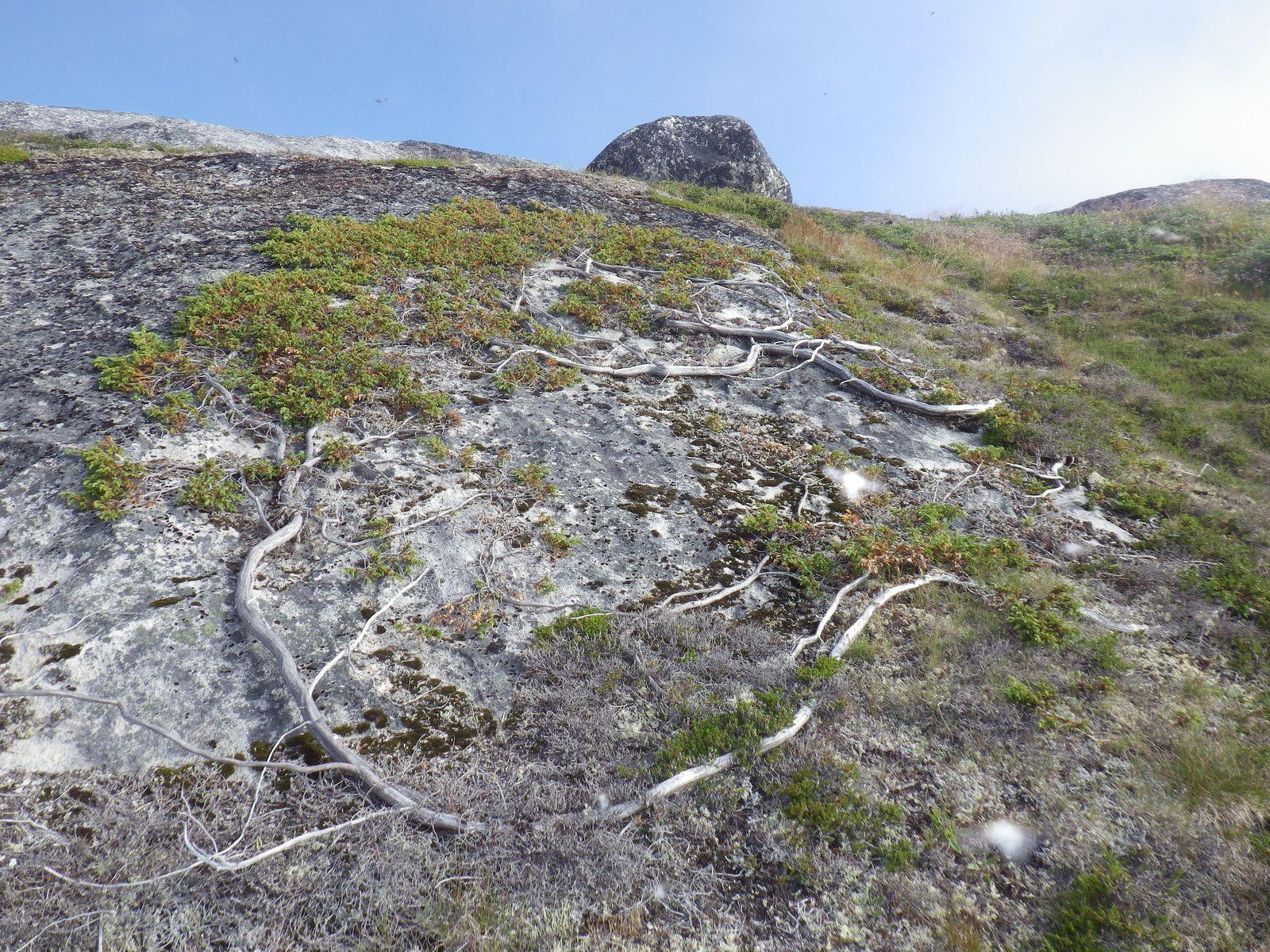 2013-08-06-1259_-_vegetation