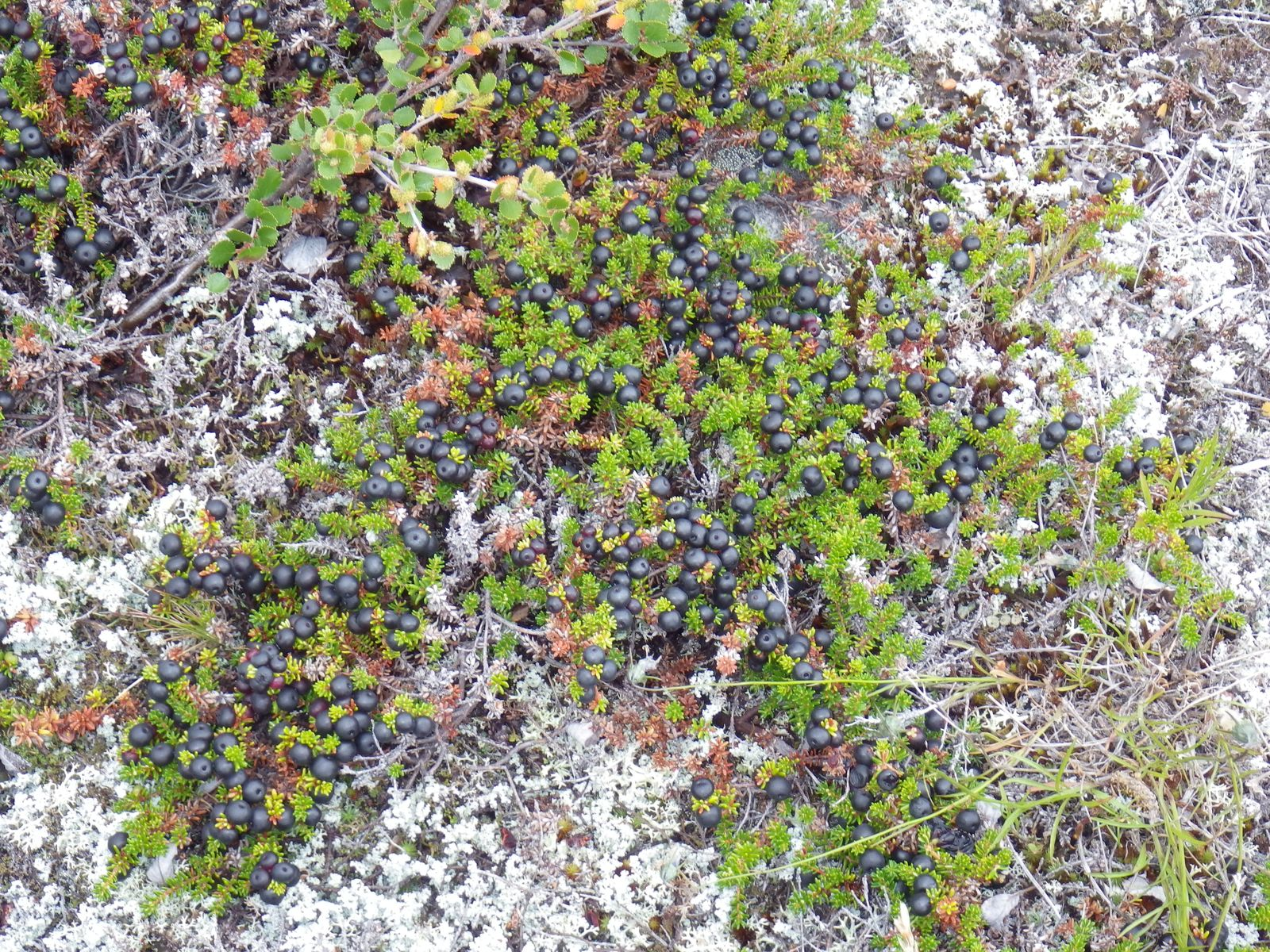 2013-08-17-1527_-_vegetation