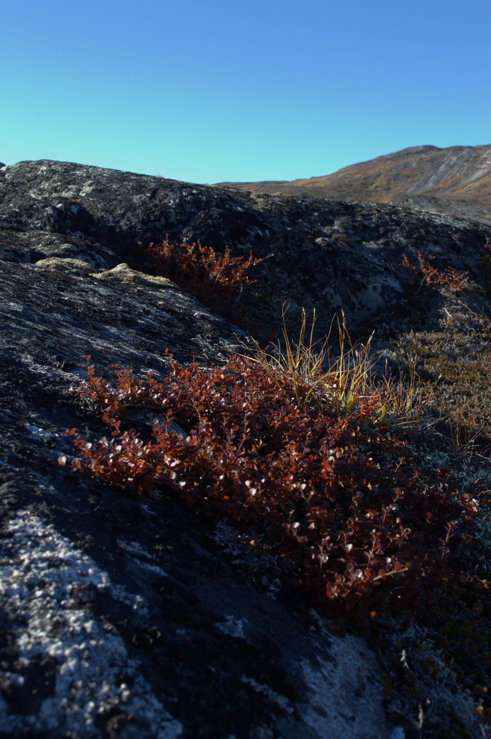 2013-09-21-1455_-_2013-09-20_qussuk_vegetation