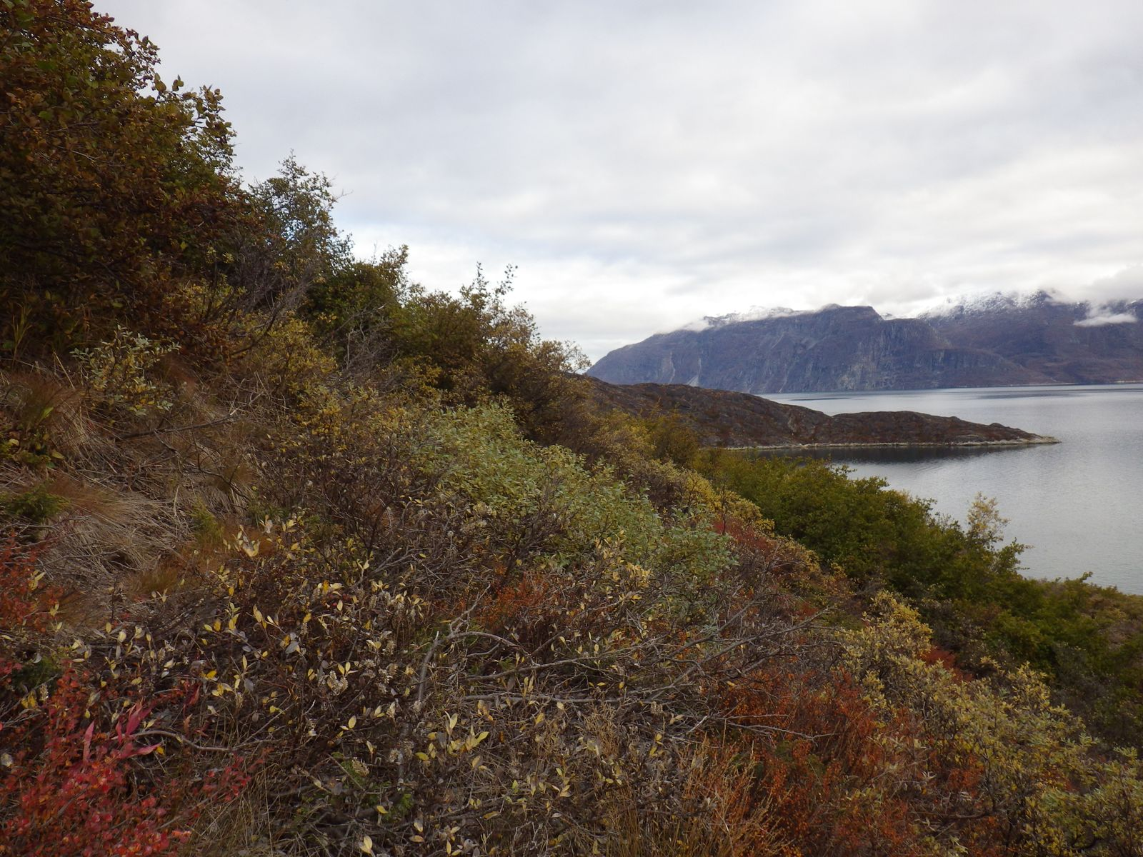 2013-09-28-1742_-_gode_1_vegetation