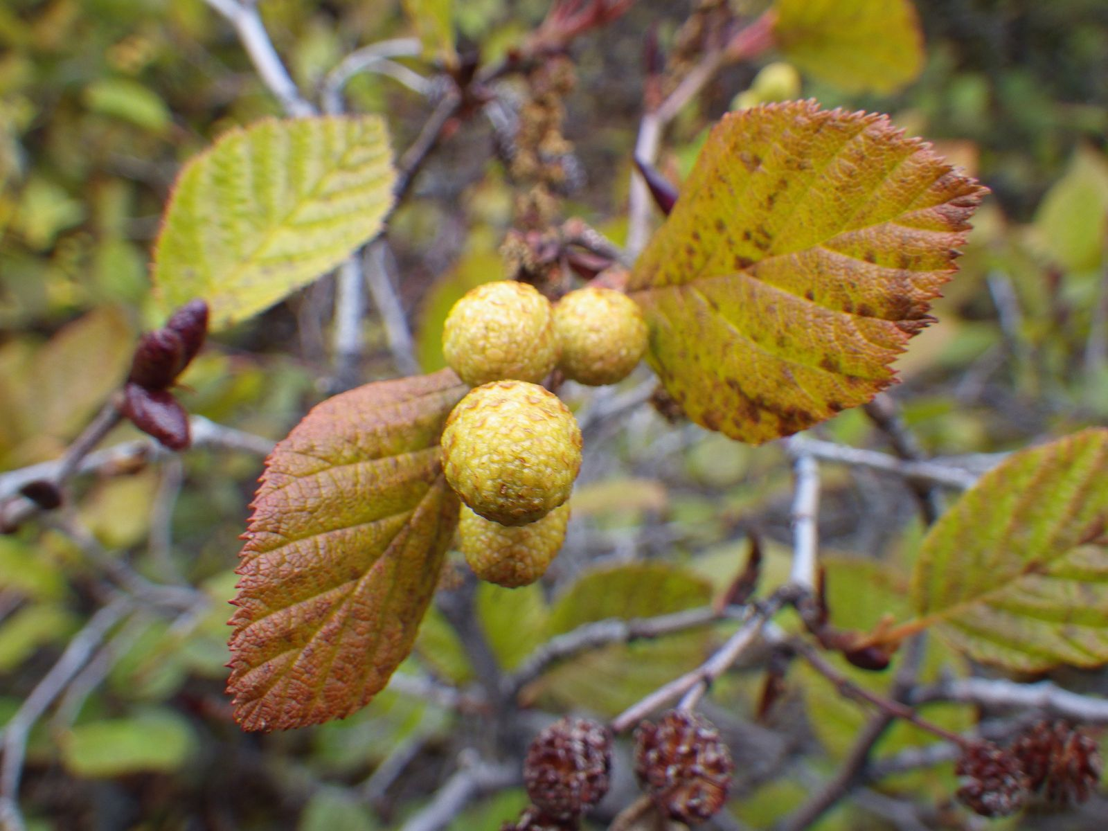 2013-09-28-1744_-_gode_1_vegetation_2_2_