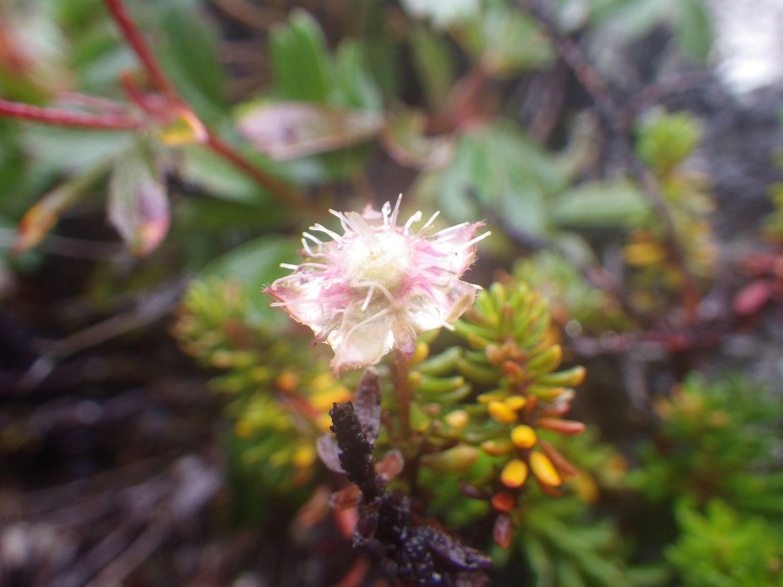 2013-09-05-1510_-_vegetation