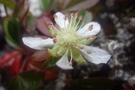 2013-09-05-1510_-_blomst_vegetation
