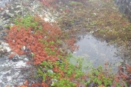 2013-09-05-1511_-_sortebaer_vegetation