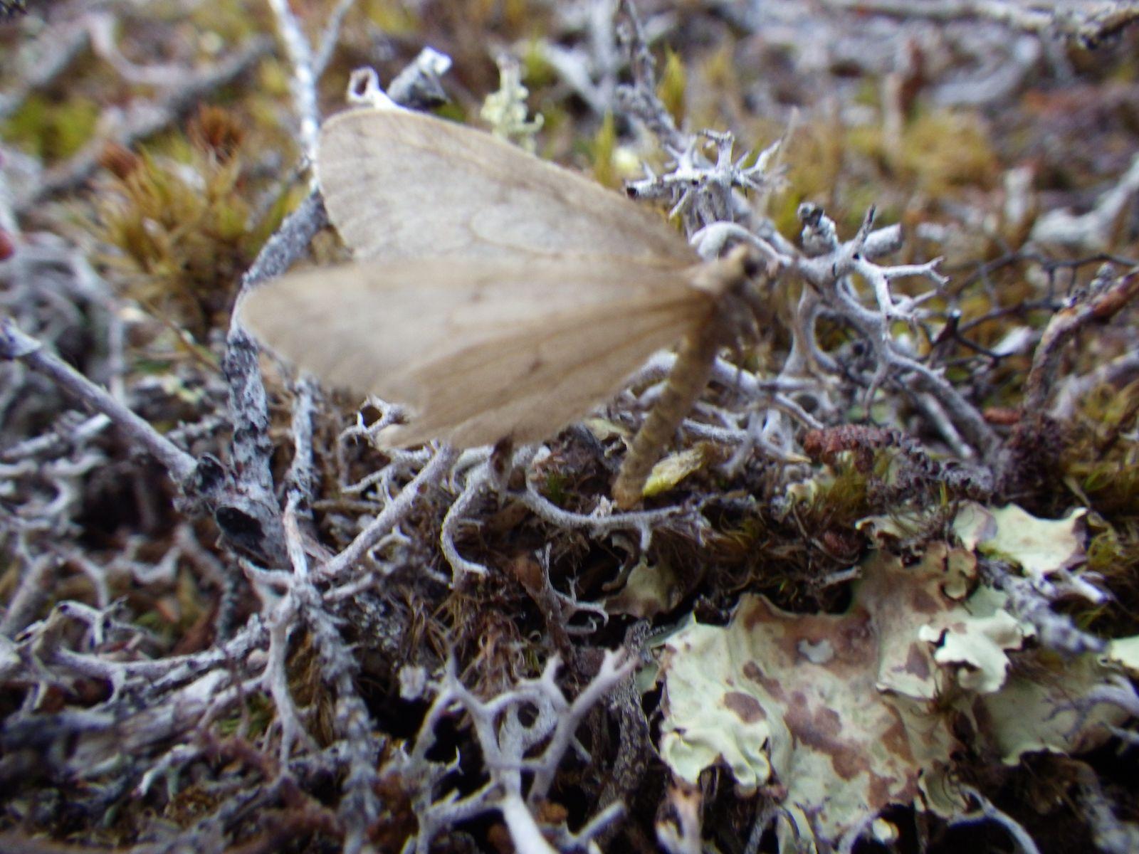 2013-10-12-2011_-_gode_1_sommerfugl_vegetation