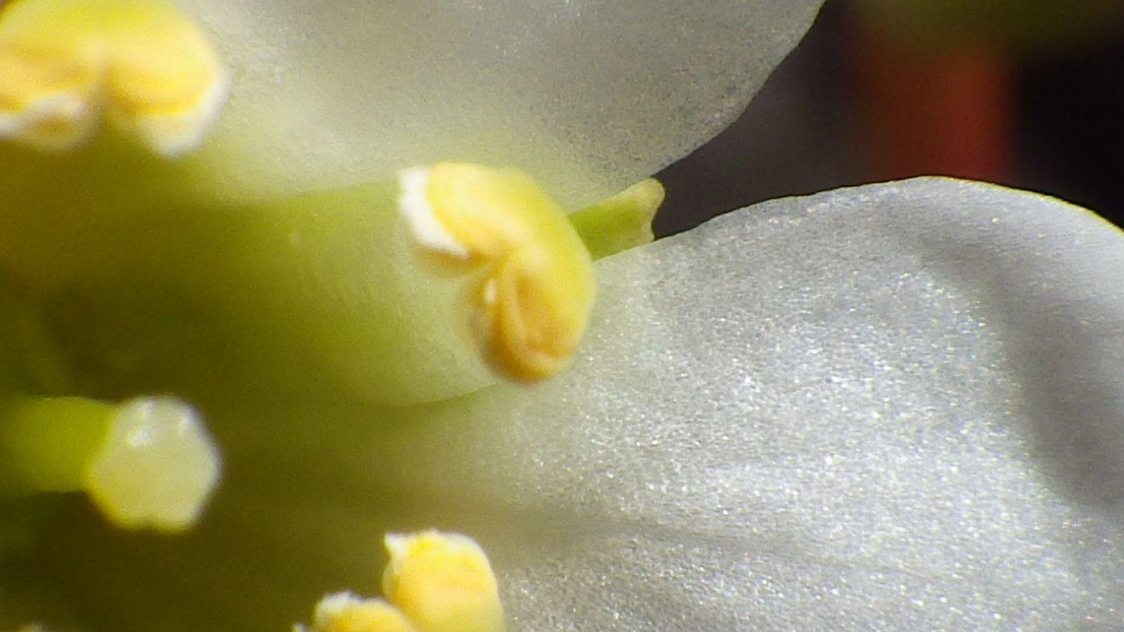 2014-06-23-1320_-_Gode_1_Vegetation_3