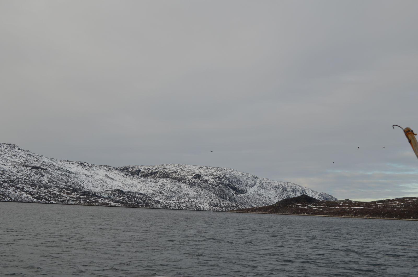 2018-11-03-1256_-_Havørn