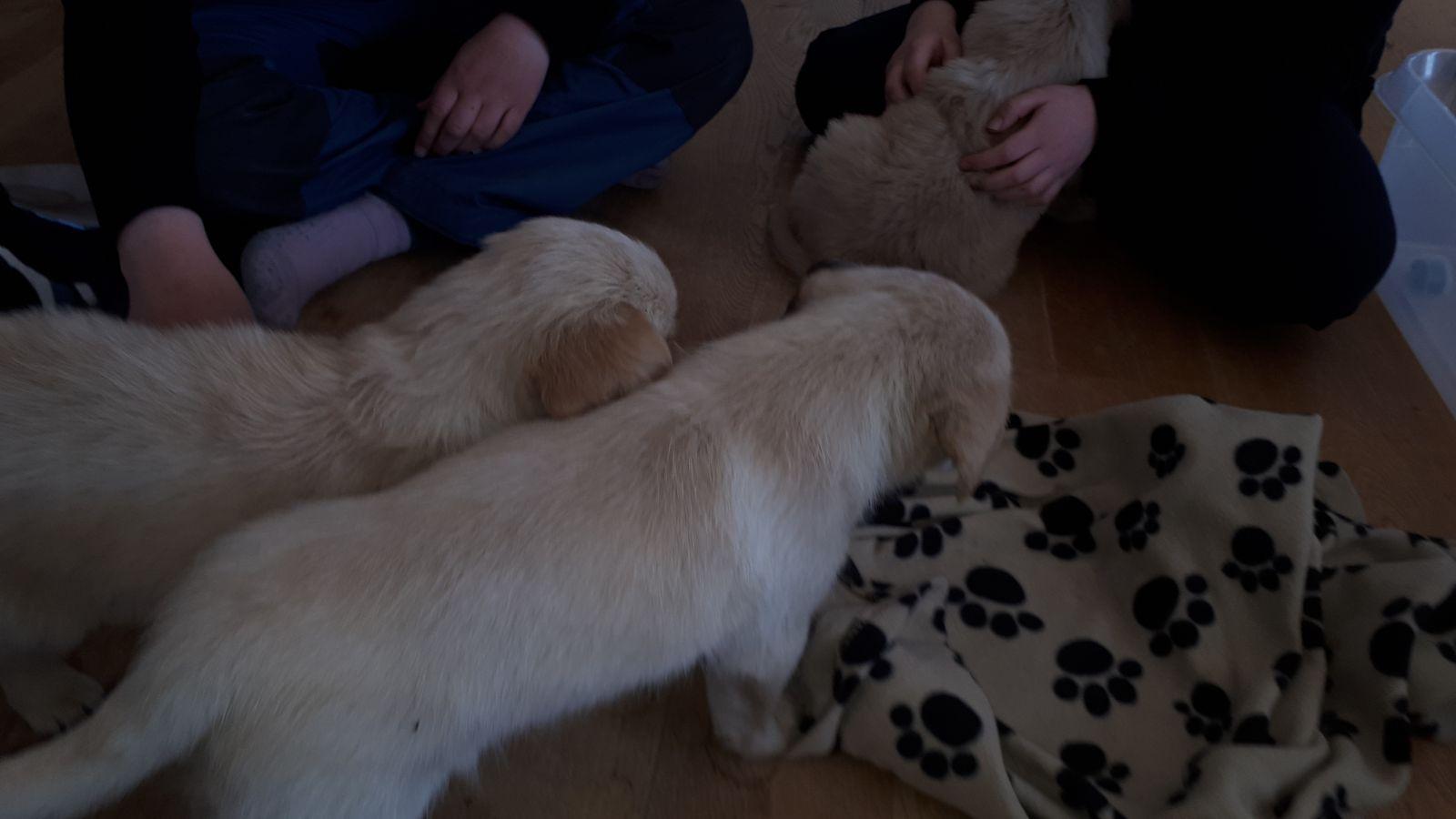 Emily og nogle af hendes søskende på 1. besøg i Pupik
