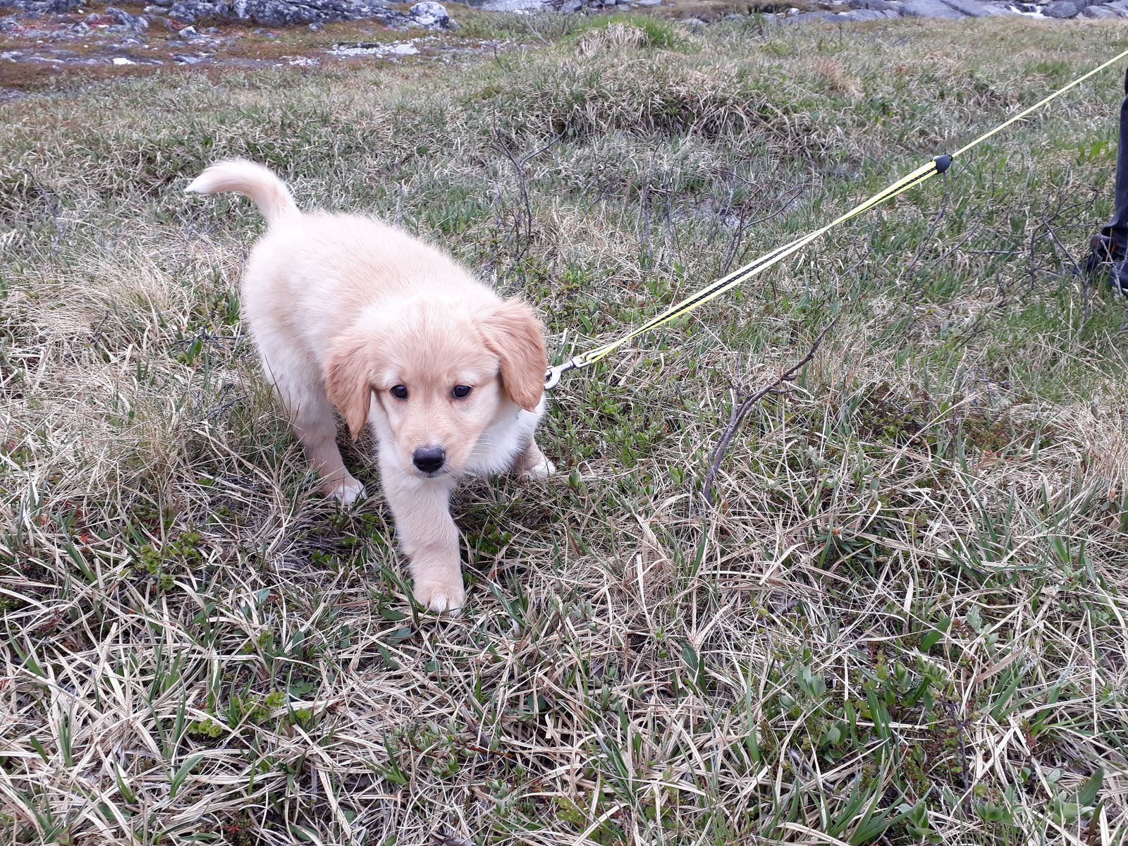 Emily's første gåtur