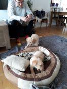 Emily og lillebror er på besøg