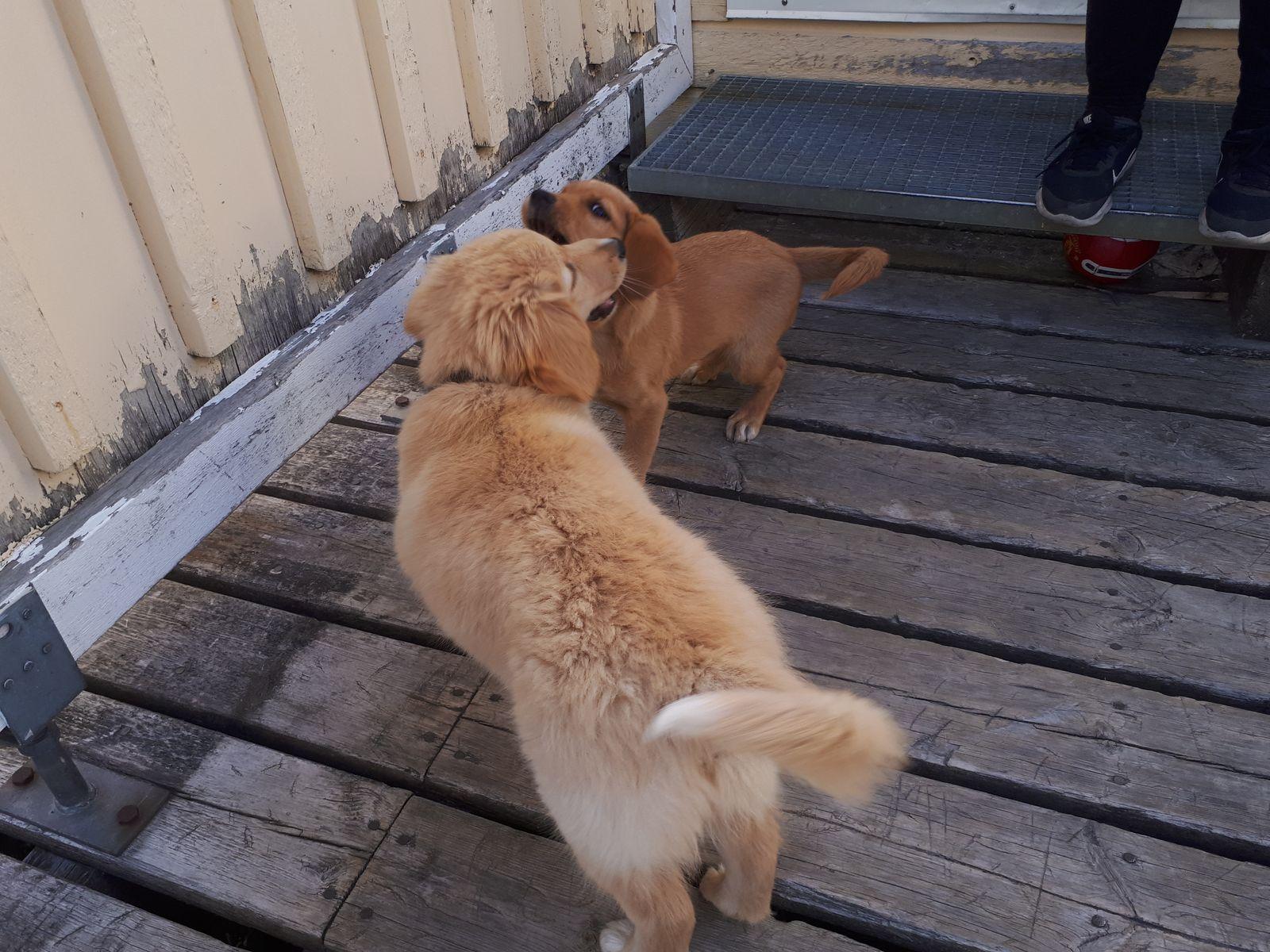 Emily møder sin søster Naala