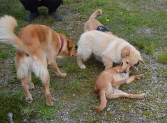 Emily møder 2 af sine søskende Marley og Naala