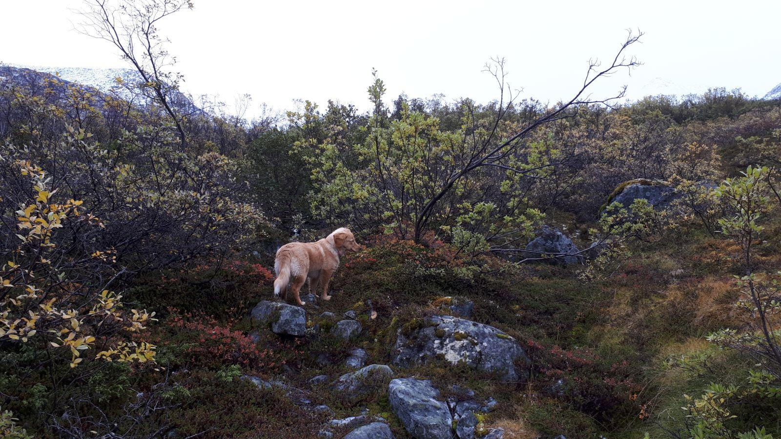Jagt i Qasiginanguit Ameralik - med Ruder 3 og Klaus